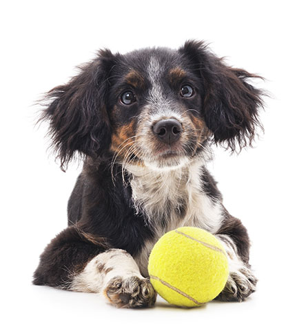 puppy with ball